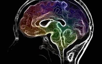 من المسؤول عن السلوك الجنسي للذكر والأنثى في الدماغ؟