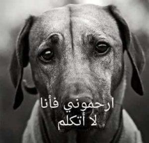 ارحمو الكلاب فيها لا تتكلم