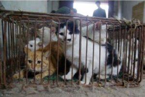 حرية القطط من جرائم الانسان