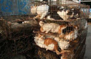 اكل الحيوانات في الصين