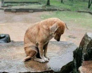 حيوانات حزين جدا