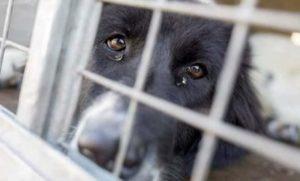 جريمة كلاب في الصين