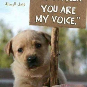 صورة عن حقوق الحيوانات