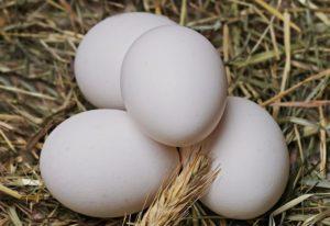 البيض فوائد لا تنتهي
