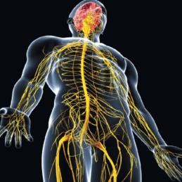 أمراض الجهاز العصبي-حلول العالم