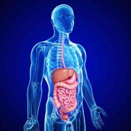 أمراض الجهاز الهضمي-حلول العالم
