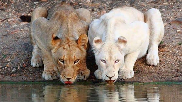 صورة توضيحة عن المرض في الحيوانات