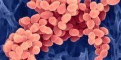 صورة عن امراض البكتيريا والفيروسات