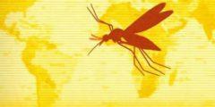 الحمى صفراء الأعراض والأسباب
