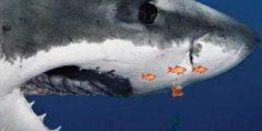 تحميل خلفية اسماك القرش المتحركة للاندرويد